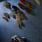 Private collection. From serie \'Jachttrofeeën\'. Hollandse nieuwe vissen